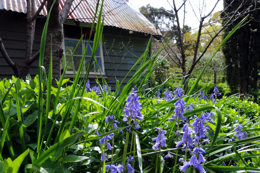 Things To Do In Heburn Springs - Lavandula